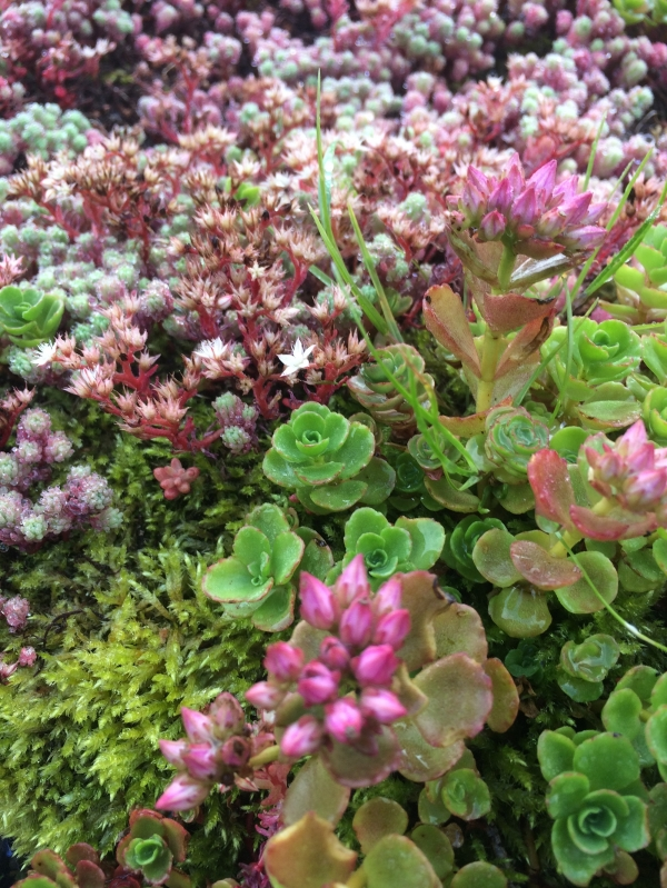 Forge green roof has it covered